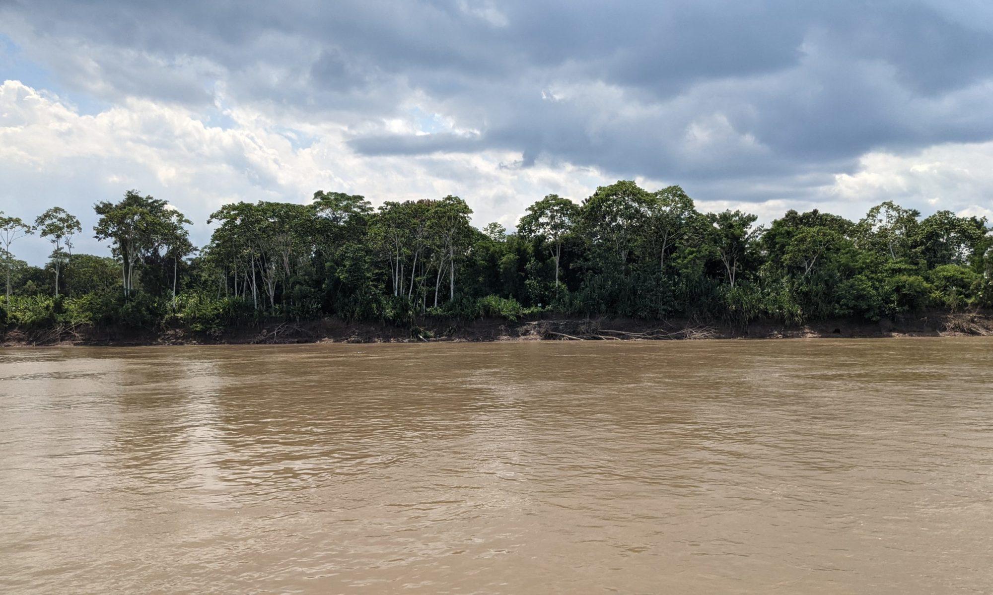 Amazon Tropics